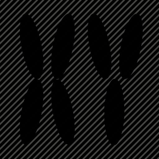 anatomy, chromosome, xy icon
