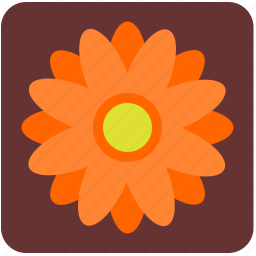 bud, camomile, chamomile, daisy, flower, nature, rose icon