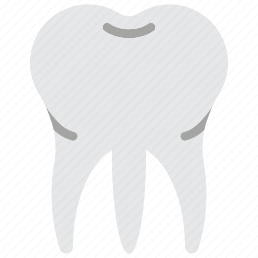 dentist, medical, molar, root, tooth icon