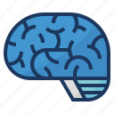brain, brainstorming, education, neurology, neuroscience icon