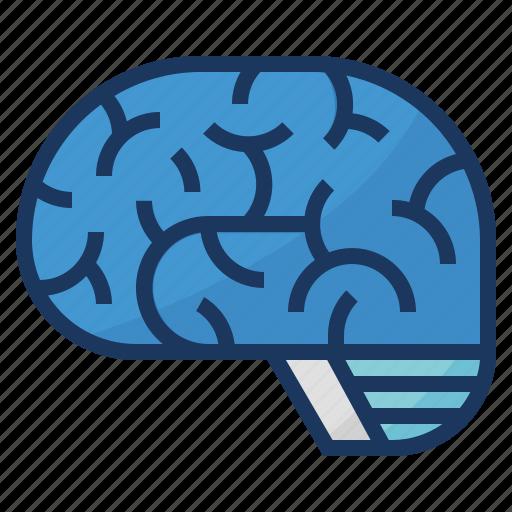 brain, brainstorming, education, neurology, neuroscience icon