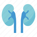 hospital, human, kidney, medical, organs icon