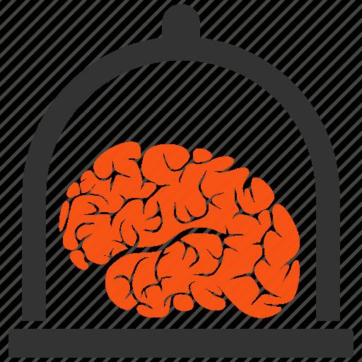 brain, conservation, memory, mind, museum, neuro, preserve icon