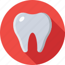dentist, human tooth, molar, stomatology, tooth icon