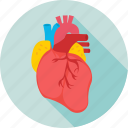 anatomy, cardiology, cholesterol, heart, human heart icon