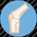 bone joints, bones, knee, knee joint, skeleton icon