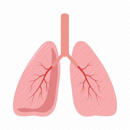 anatomy, cartoon, health, human, lung, medical, organ icon