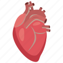 anatomy, aorta, body, cartoon, heart, medical, medicine icon