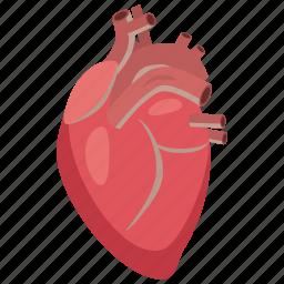 anatomy, aorta, body, cartoon, heart, medical, medicine icon