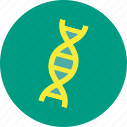 dna, genetic, helix, medical, spiral, strand icon