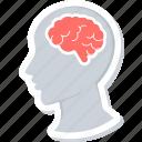brain, human, organ