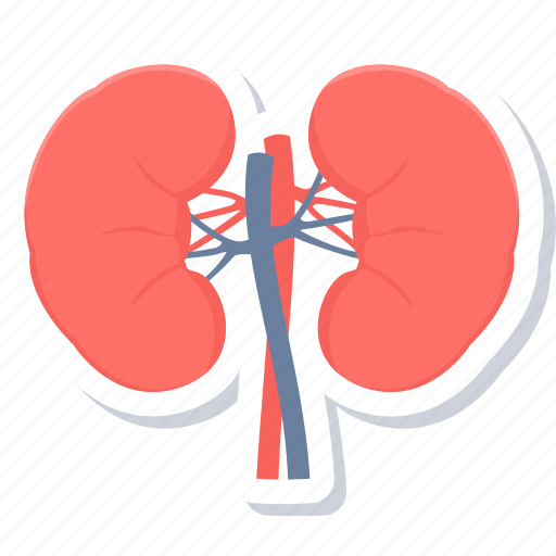 anatomy, body part, human, internal, kidney, kidneys, organ icon