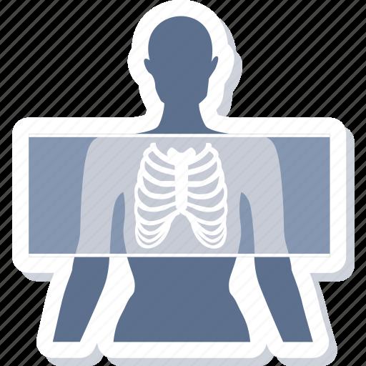 anatomy, bones, lungs, organ, rays, skeleton, xray icon