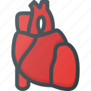anatomy, health, heart, medical, organ icon
