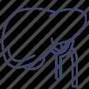 baldder, gall, liver, organ icon