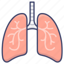 lungs, anatomy, organ, lung