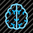 brain, head, mind