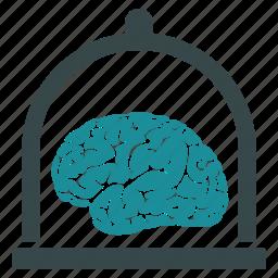 anatomy, brain, intelligence, mind, organ, preservation, preserve icon