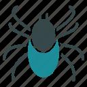 acarus, bedbug, beetle, bug, insect, mite, tick