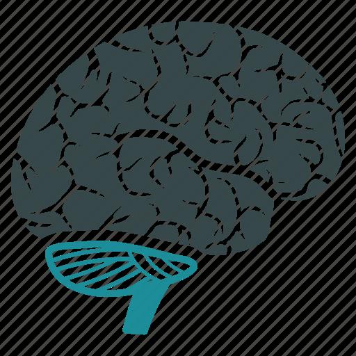 brain, human, memory, mind, organ, think, thinking icon