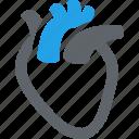 cardiology, cardiovascular, human heart icon