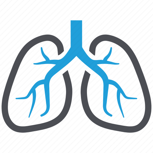 anatomy, breath, human lungs, lungs, pulmonology icon