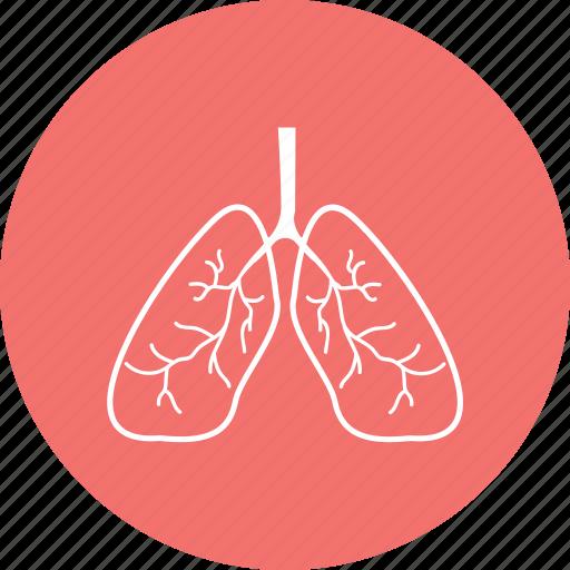 anatomy, detoxification, hepatology, live icon