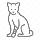 bandage, cat, vet, veterinarian icon