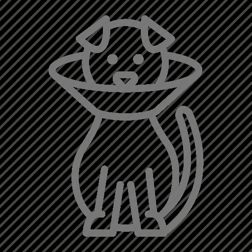cone, dog, vet, veterinarian icon