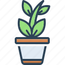 botanical, foliage, greenstuff, home garden, nature, plant, tree