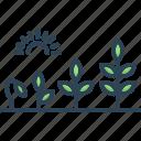 flourish, growth, evolution, sprout, transformation, rise, development
