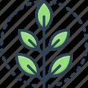 fresh, original, environment, green, leaf, natural, ecology