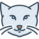 adorable, animal, cute, domestic, face, kitten, kitty cat