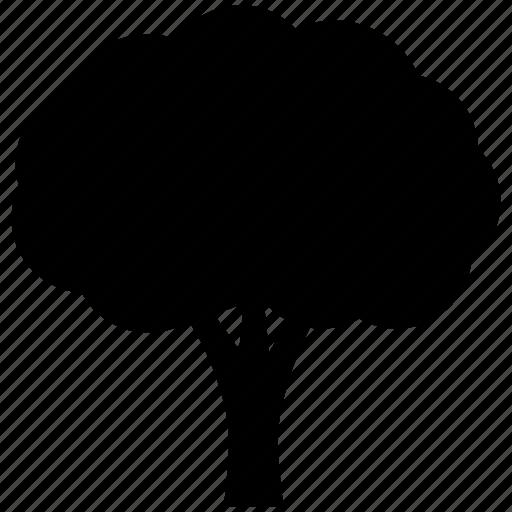 natural, nature, oak, plant, tree icon