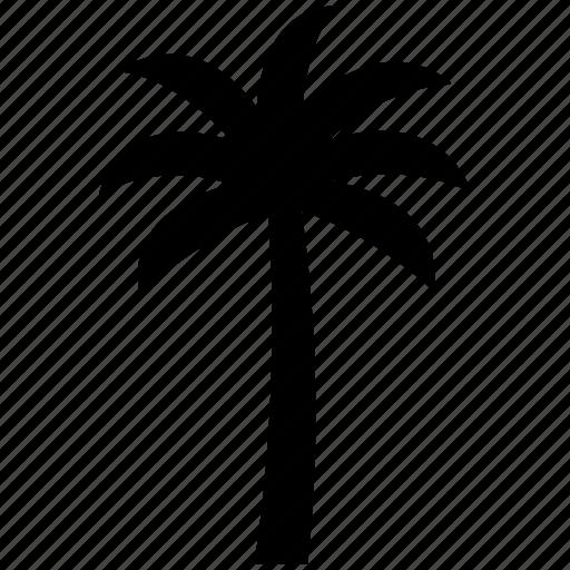 beach, coco palm, coconut, coconut tree, palm, plant, tree icon