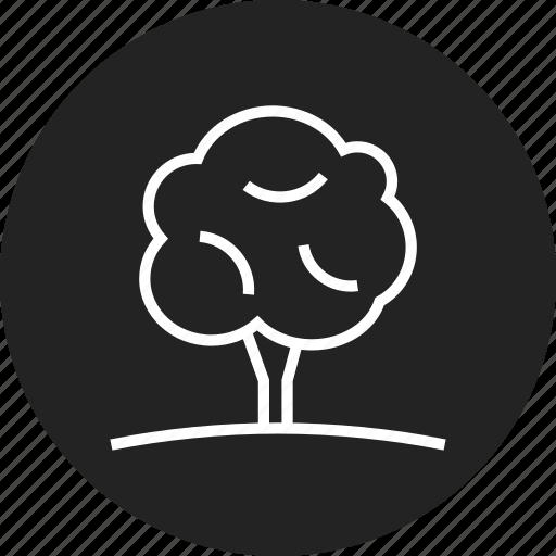 eco, grow, nature, tree icon