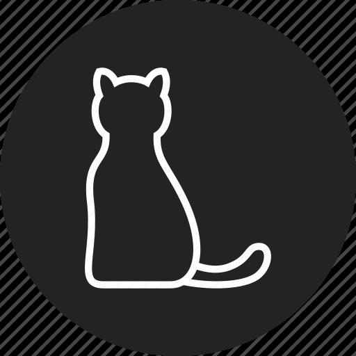 cat, kitty, pet, vet icon