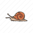 animal, freshwater snail, land snail, mollusc, sea snail, shell, snail