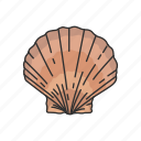 animal, marine animal, mollusk, ornament, scallop, seafood, shell icon