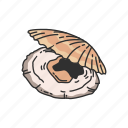 scallop, ornament, animal, seafood, mollusk, marine animal, shell