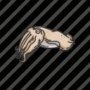 animal, cuttle, cuttlebone, cuttlefish, marine animal, mollusc, mollusk icon