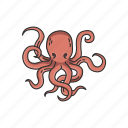 animal, marine animal, mollusc, mollusk, octopus, tentacles icon