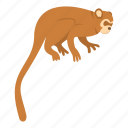 animal, brown, mammal, monkey, nature, primate, wildlife icon