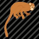 animal, brown, mammal, monkey, nature, primate, wildlife