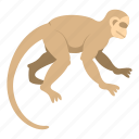 animal, capuchin, monkey, nature, primate, white, wildlife icon