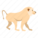 animal, baboons, japanese, macaque, monkey, primate, snow