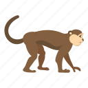 animal, macaca, macaque, monkey, nature, primate, sylvanus icon