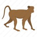 animal, mammal, monkey, nature, primate, wild, wildlife