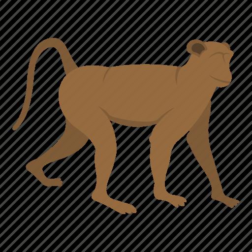 Animal, mammal, monkey, nature, primate, wild, wildlife icon - Download on Iconfinder