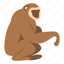 animal, mammal, monkey, nature, primate, sitting, wildlife icon